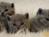 Kociaki z miotu na literę HH (640x335)