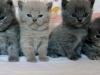 miot kociaków na BB